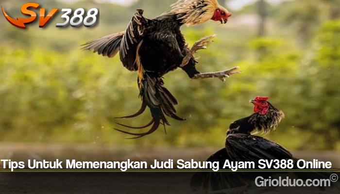 Tips Untuk Memenangkan Judi Sabung Ayam SV388 Online